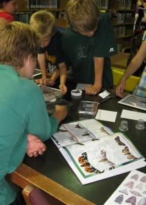 Identifying Live Moths 1