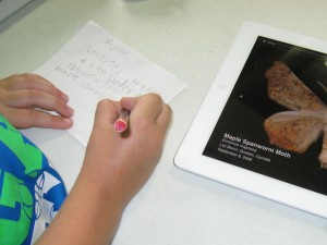 Using ipads to Learn Local Moths