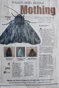 Moth Week 2013.1